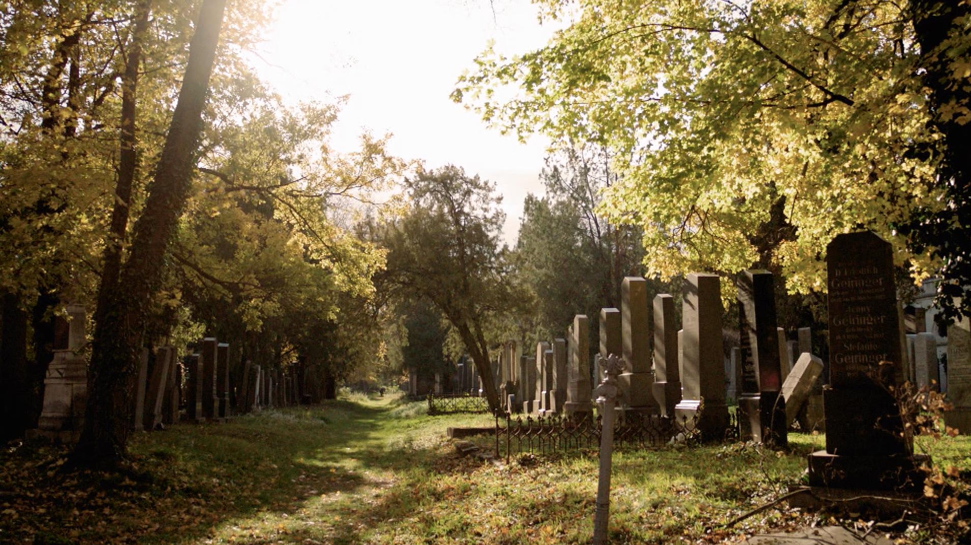 Einmal Kurz Gelacht Zentralfriedhof