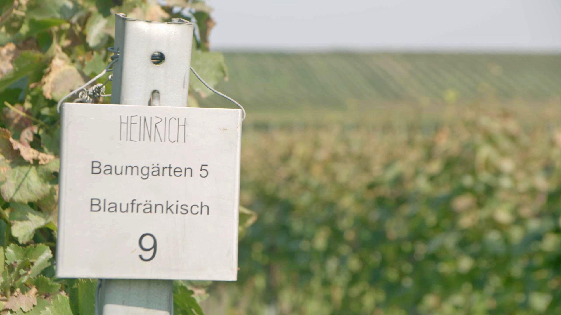 Warum_Wein_F7_Weingut_Heinrich