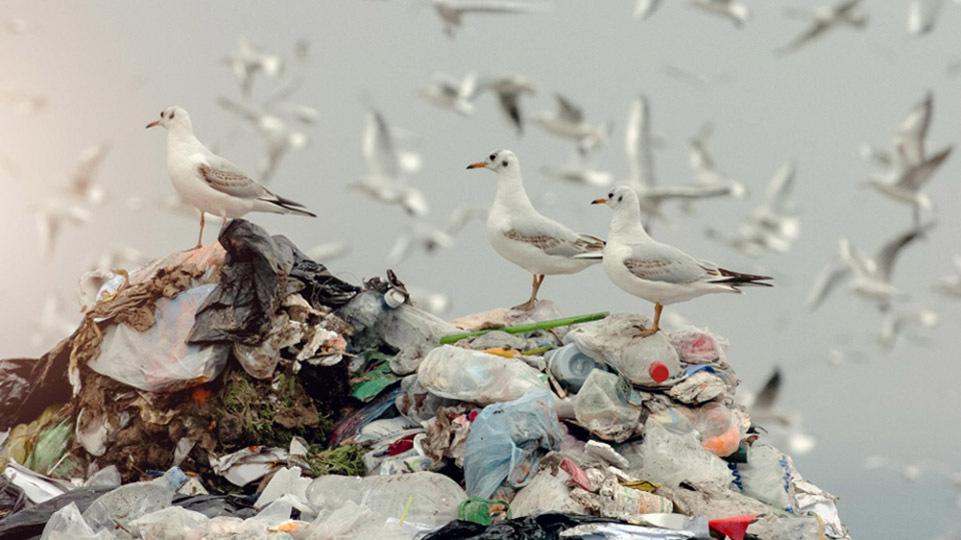 Umweltverschmutzung drei moewen stehen auf einem berg aus muell